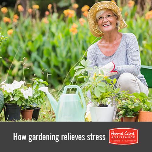 Relieving Senior Stress Through Gardening in Oakville, ON